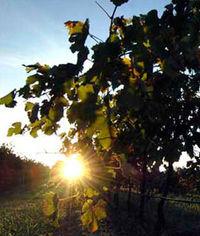 Oatley Sunrise 2