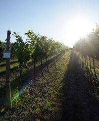 Hill vineyards sm