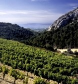 Rhone Vineyard