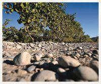 Stoneleigh Riverbed Stones