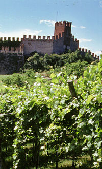 Soave Vineyard and Castle narrow