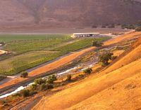 Qupe-vineyard