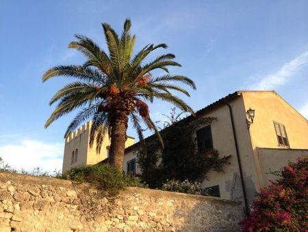 22a Palm Tree