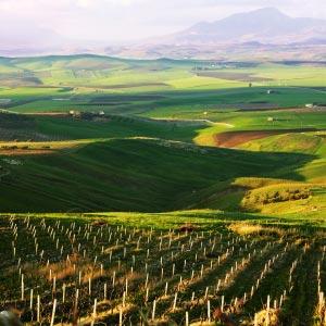 Sicily-wine-region-1