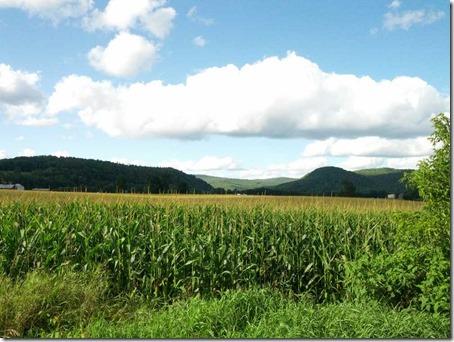 corn forever