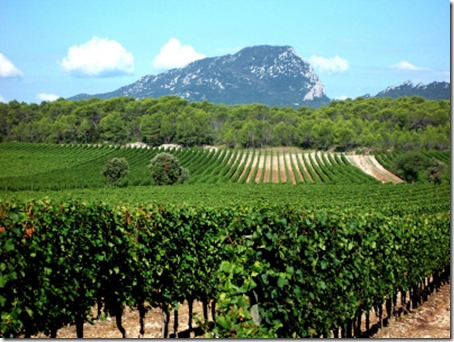 languedoc-roussillon-wine-region-1