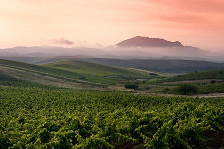 sicily-extensive-vineyard-view-at-sunrise
