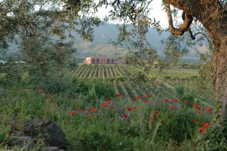 Vini-wines-etna-sicily-calderara-sottana-03