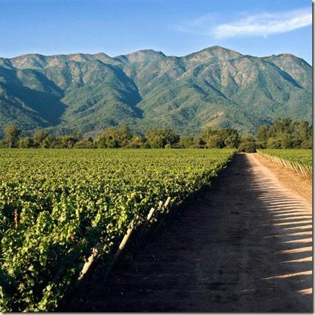 Quinta Vineyard 2