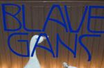 Blauegans